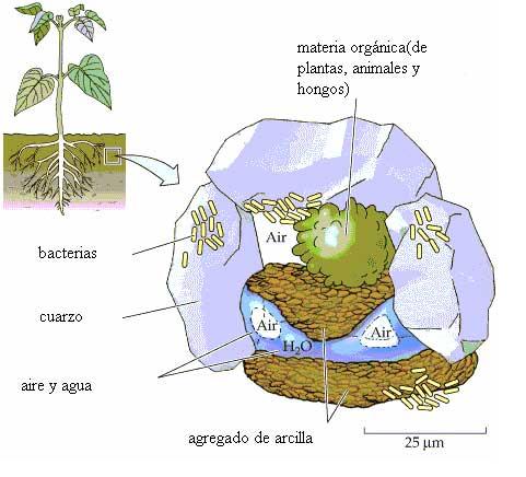 Beneficios de aplicar materia org nica compostada a los for Que elementos conforman el suelo