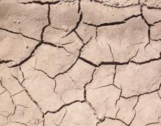 Lucha contra la erosión y fijación del suelo