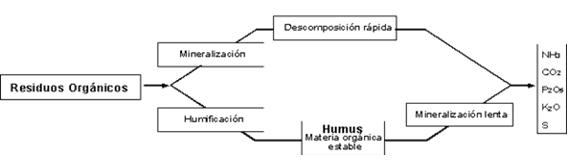 comportamiento materia organica