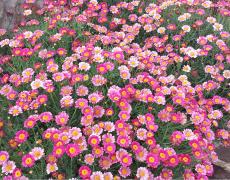 Jardinería y Paisajísmo