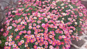 jardineria-y-paisajismo